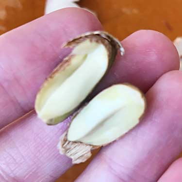 what inside of raw rambutan seed looks like