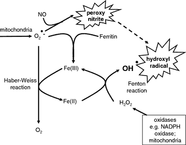 diagram of Fenton and Haber-Weiss reactions