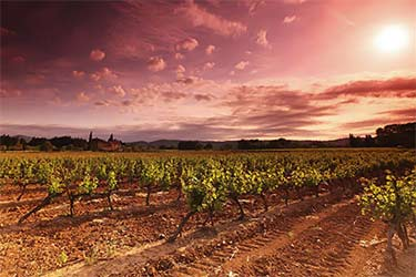 French country vineyard at sunset