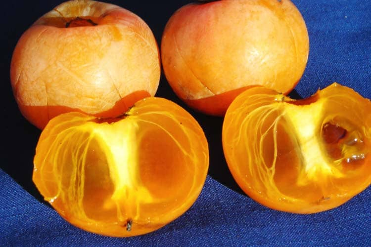 what a ripe Diospyros virginiana (American persimmon) looks like inside