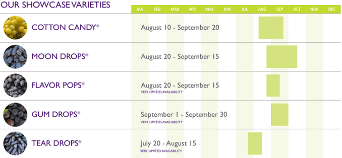calendar of when you can buy Moon Drops and Cotton Candy grapes in season