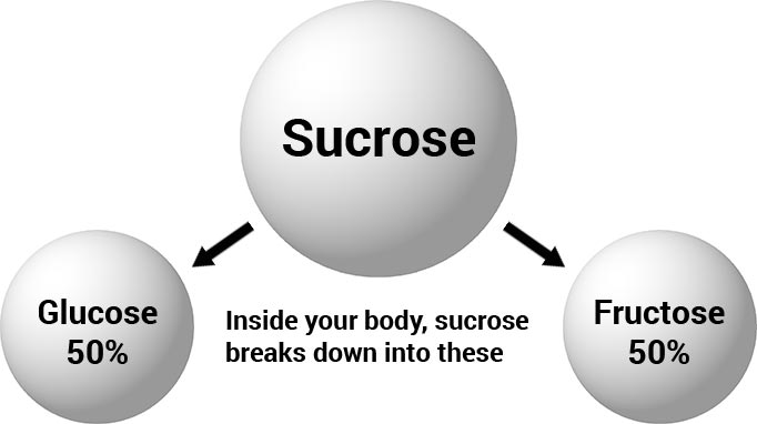 sucrose conversion to glucose and fructose during digestion
