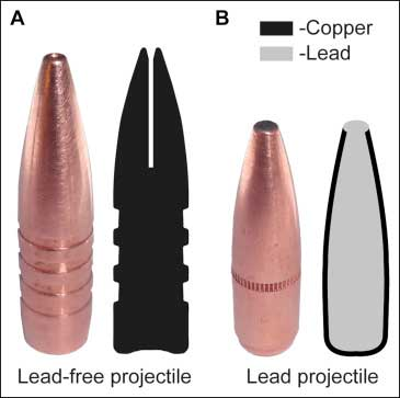 lead vs. lead-free bullets