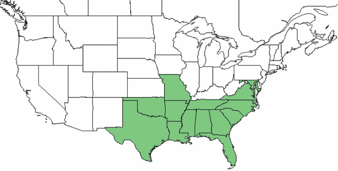 map of where beautyberry bush grows native