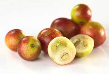 fresh camu camu berries