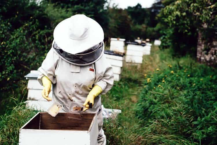 beekeeper collecting honey from hive box