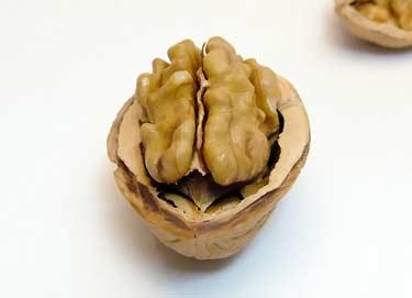 half of a walnut in shell