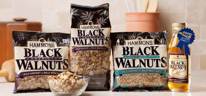 Hammons black walnuts and oil varieties