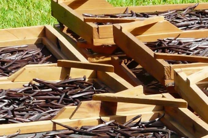crates filled with whole dried vanilla beans