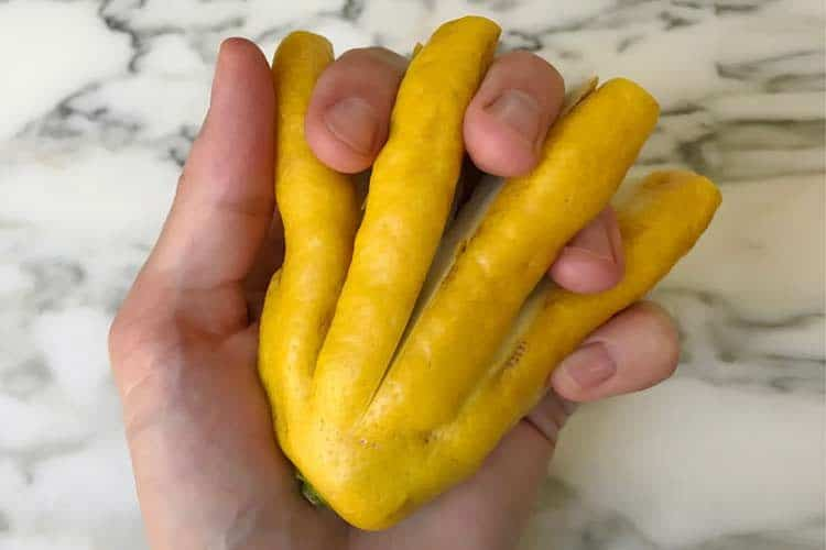 holding hand with fingered citron fruit