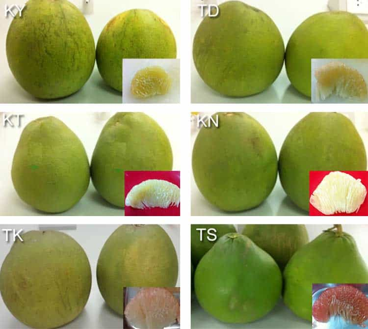 honey and pink pomelo fruits with green skin