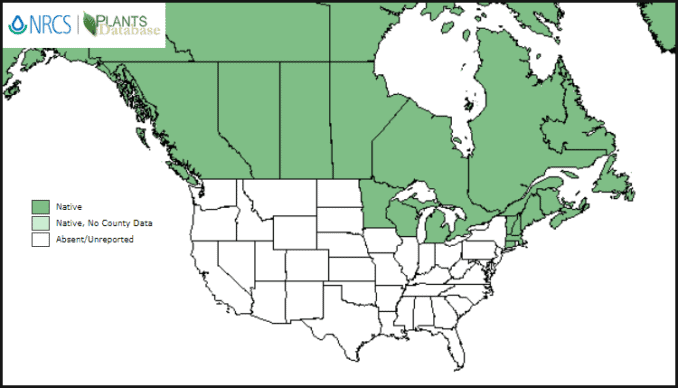 North American map showing where lingonberries grow native to climate