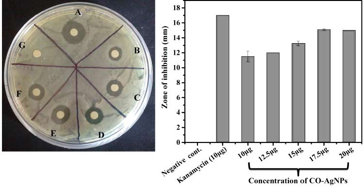 antibacterial activity of pili and nano silver particles in lab test