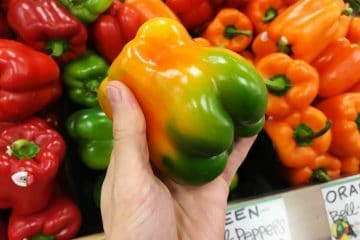 holding a fresh orange, yellow and green bell pepper