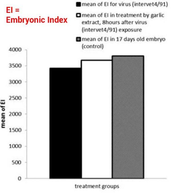 graph showing garlic extract working on coronavirus in vitro chicken eggs