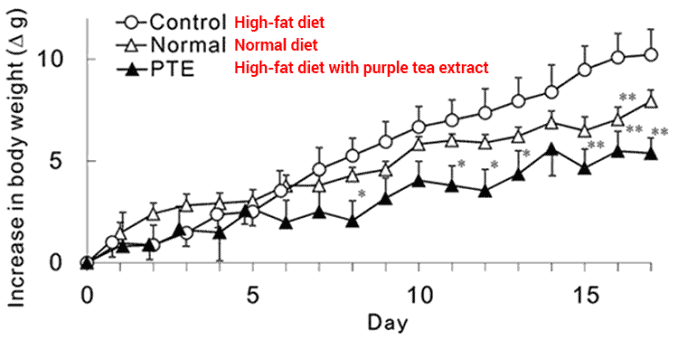 line graph shows losing weight with purple tea while on a high-fat diet