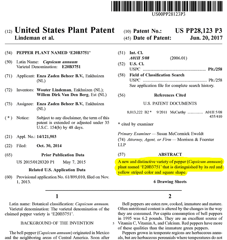 US patent for Holland striped sweet bell peppers