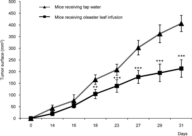 graph of tumor growth with extract of olive leaf vs. placebo