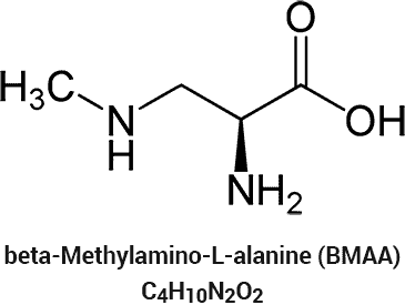 beta-Methylamino-L-alanine (BMAA) shape and chemical formula