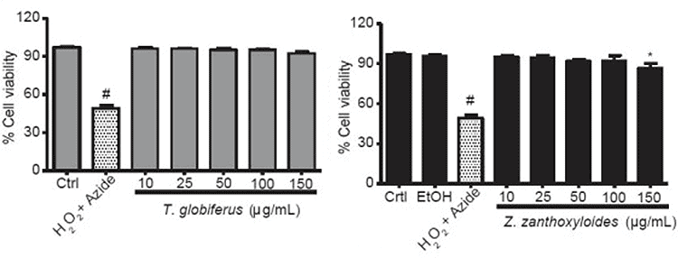 graph showing toxicity of Szechuan pepper extracts on human cells