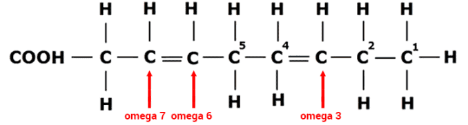 structural differences between omega 7, omega 3, and omega 6 fatty acid oils