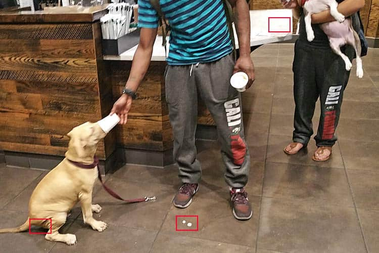 safety and health hazards of puppuccino circled in red