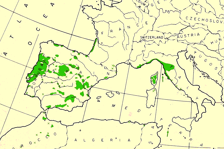 map showing where Pinus pinaster trees come from and native growing range