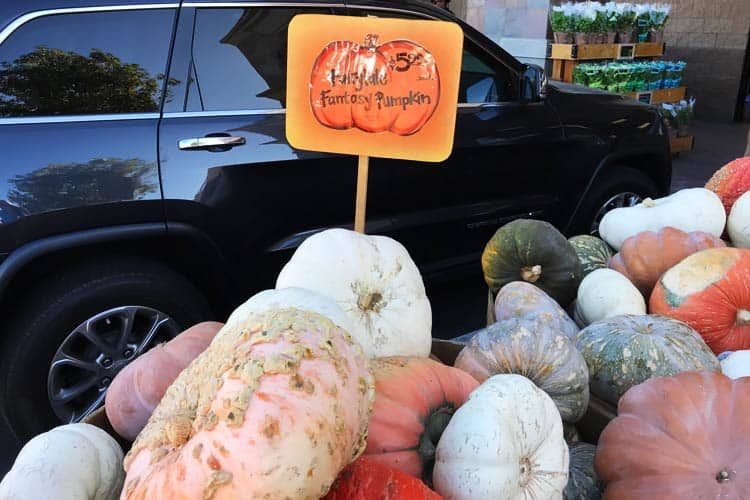 ghost pumpkins for sale at Trader Joe's