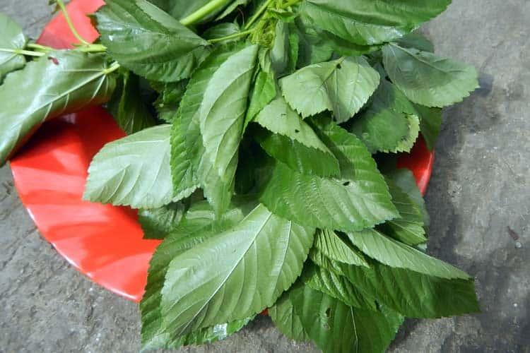 fresh moroheiya leaves on plate