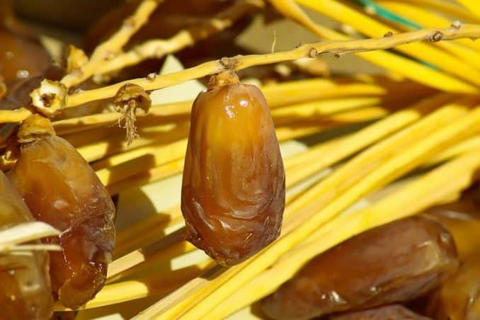 ripe date hanging on branch