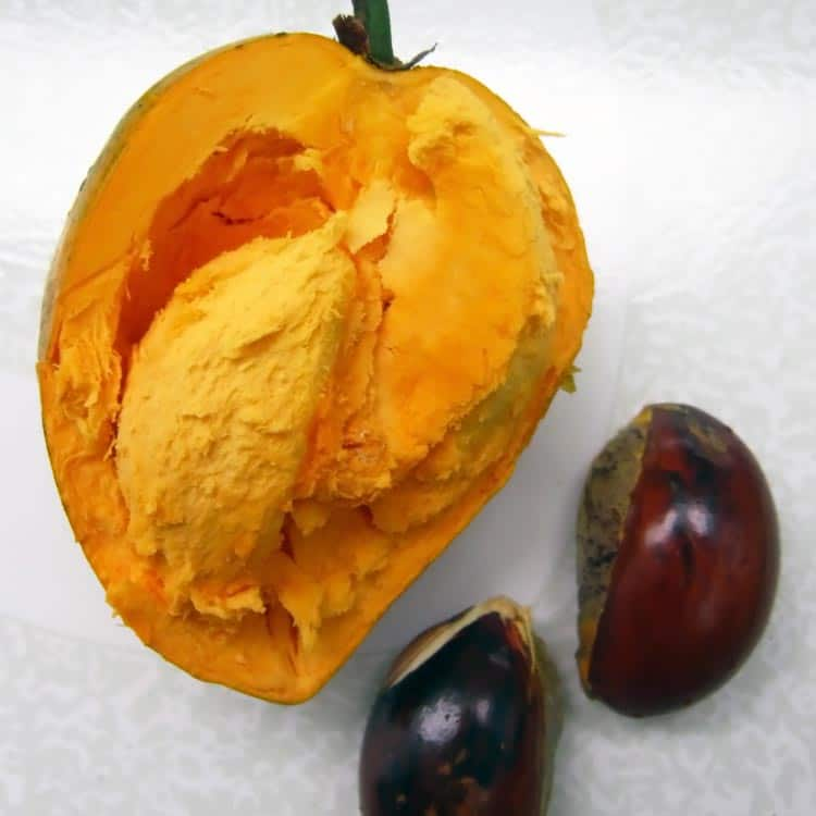 what the inside of a fresh lucuma fruit and seeds look like