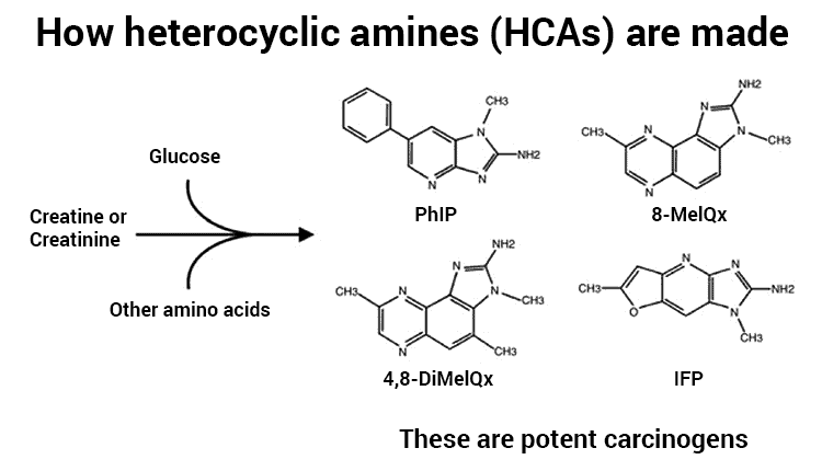 diagram showing how heterocyclic amines (HCAs) are made or formed from creatine in meat