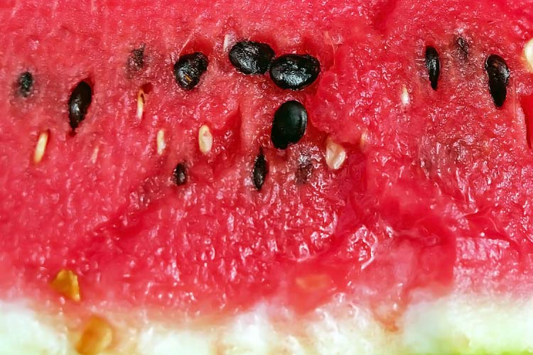 raw black watermelon seeds in red fruit flesh