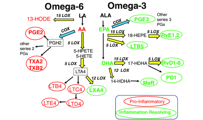 proinflammatory effects of omega 6 versus anti-inflammatory effects of omega 3 fatty acids