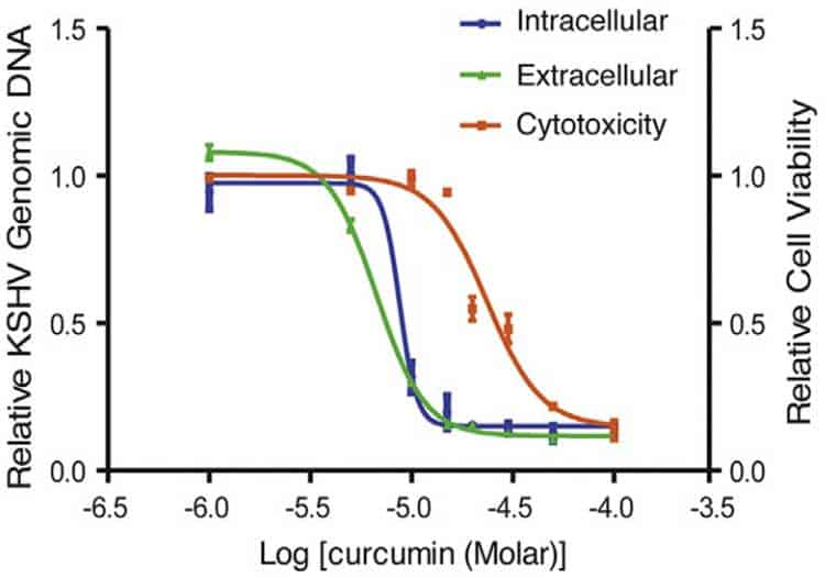 curcumin antiviral graph