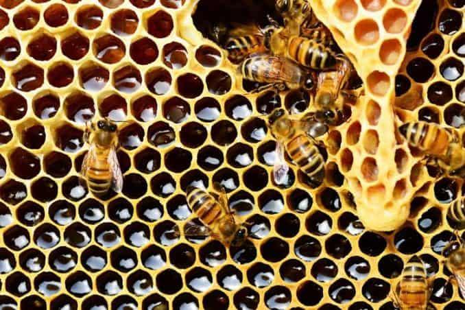 bees on honeycomb nest