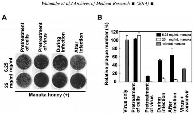 Manuka honey antiviral flu data and test results