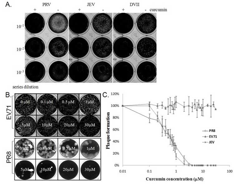 turmeric effects on influenza virus replication