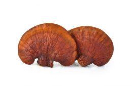 ganoderma-mushroom-superfoodly